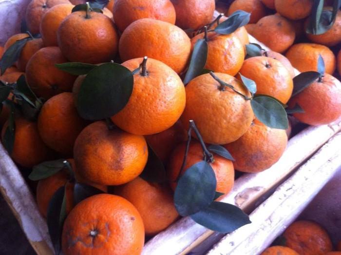 Để không gián tiếp làm hại sức khỏe, chúng ta cần biết cách phân biệt hoa quả ngậm hóa chất. Cam quýt nên chọn quả tròn đều, da bóng láng, không có đốm hay sẹo. Cam quýt chín có vỏ xanh ửng vàng đều là trái chín cây.