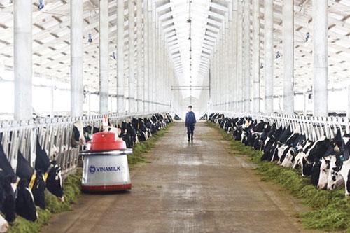 Đa dạng hóa sản phẩm chăn nuôi trong thời gian tới