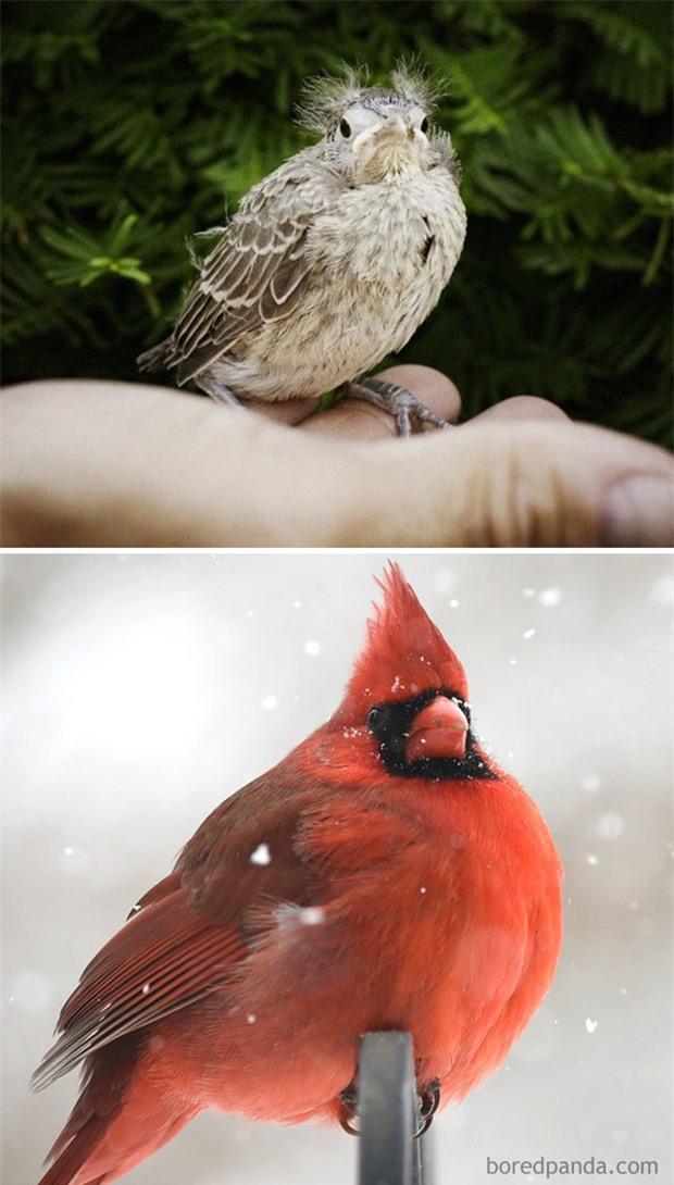 Những loài chim có màn dậy thì thành công nhất mọi thời đại: Lúc bé xâu xấu, lớn lên lại đẹp thấu trời xanh - Ảnh 1.