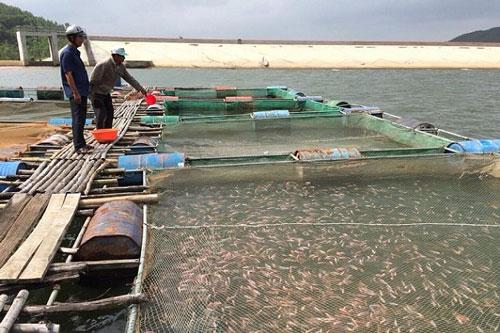 Giảm nghèo từ nuôi cá lồng ở xã Vĩnh Hảo