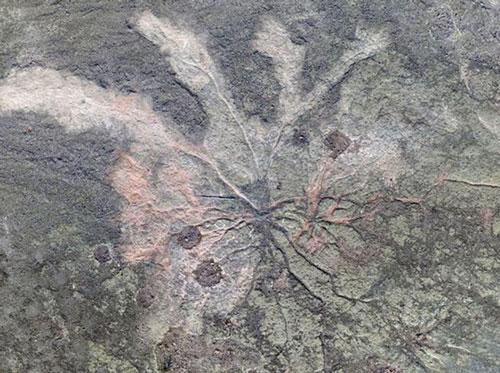 Hình ảnh mạng lưới khu rừng hoá thạch cổ đại mới được phát hiện.