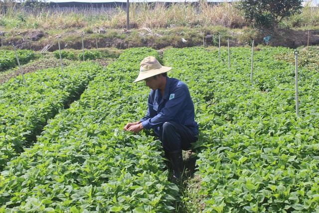 Anh Minh đang chăm sóc vườn rau thơm của gia đình