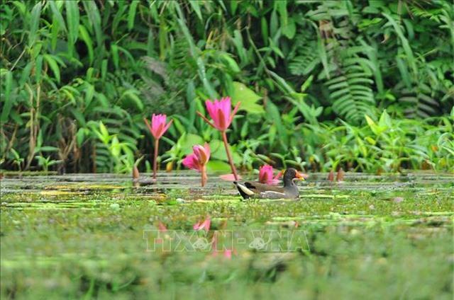 Mùa chim di trú trên đầm Vân Long, Ninh Bình - 2