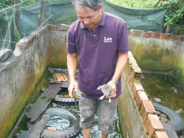 Ông Nguyễn Thanh Khuê bên đàn ếch bố mẹ