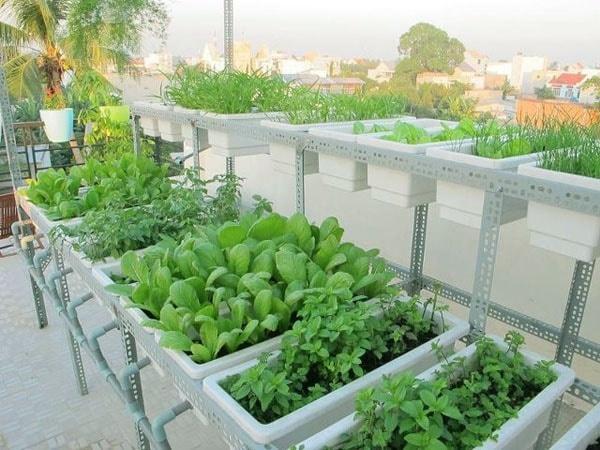 Nếu bạn đang trồng rau sạch tại nhà, hãy tham khảo ngay mẹo hay chăm sóc vườn rau bằng coca này.
