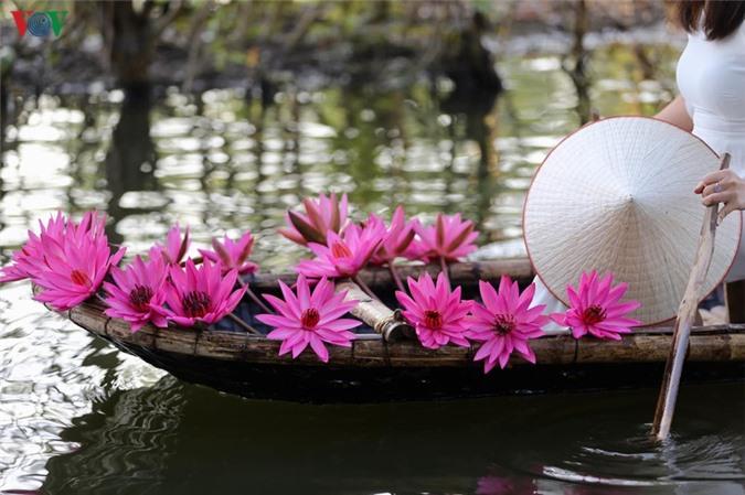 hoa sung chua huong van dep nao long trong gia lanh mua dong hinh 11