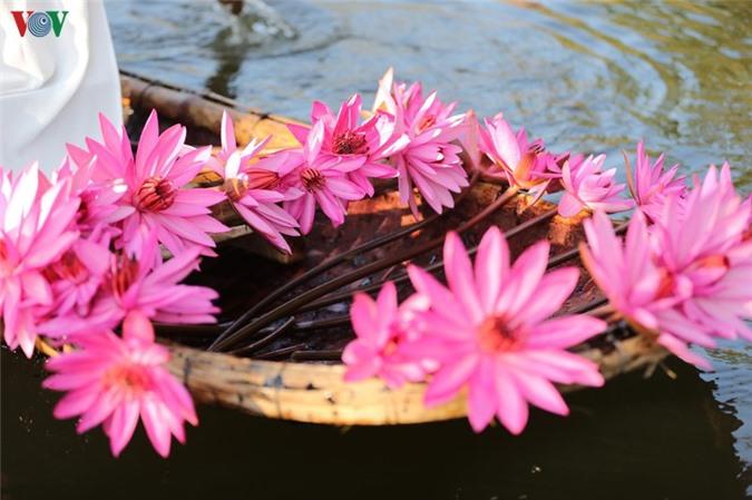 hoa sung chua huong van dep nao long trong gia lanh mua dong hinh 12