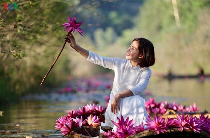 hoa sung chua huong van dep nao long trong gia lanh mua dong hinh 6