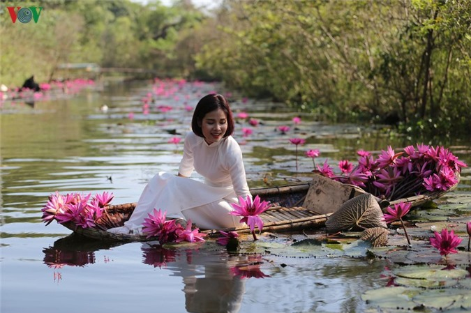 hoa sung chua huong van dep nao long trong gia lanh mua dong hinh 7