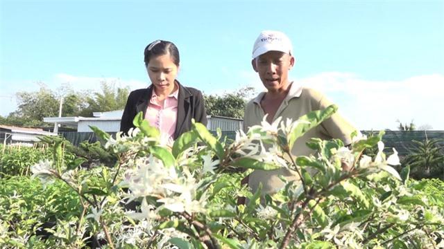 Mai Cẩm Thạch - cây cảnh đẹp lạ từ làng hoa Sa Đéc - Ảnh 3.