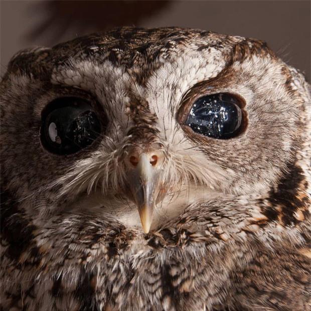 Những loài vật sở hữu đôi mắt biếc đẹp đến rợn người nhưng phía sau là những câu chuyện hết sức bi thương - Ảnh 7.