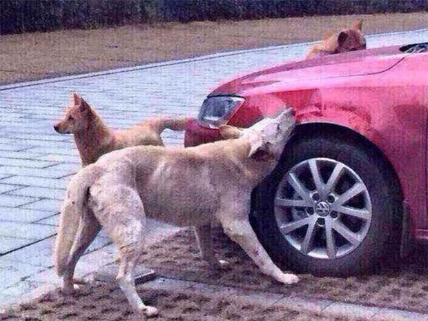 Những màn báo thù đầy cuồng nộ trong thế giới động vât: Không chỉ con người, vì sinh tồn, động vật có thể làm bất cứ điều gì! - Ảnh 4.