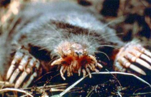 Sốc loạt động vật đáng sợ như quái vật trong phim viễn tưởng - Ảnh 4.