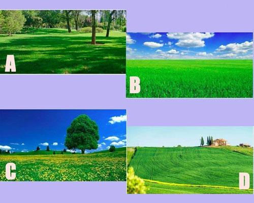 Bạn thấy ấn tượng với cánh đồng nào?