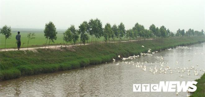 Sửng sốt với nghĩa địa mộ thân cây gỗ lim nguyên vẹn từ 3.000 năm trước ở Hưng Yên - Ảnh 3.