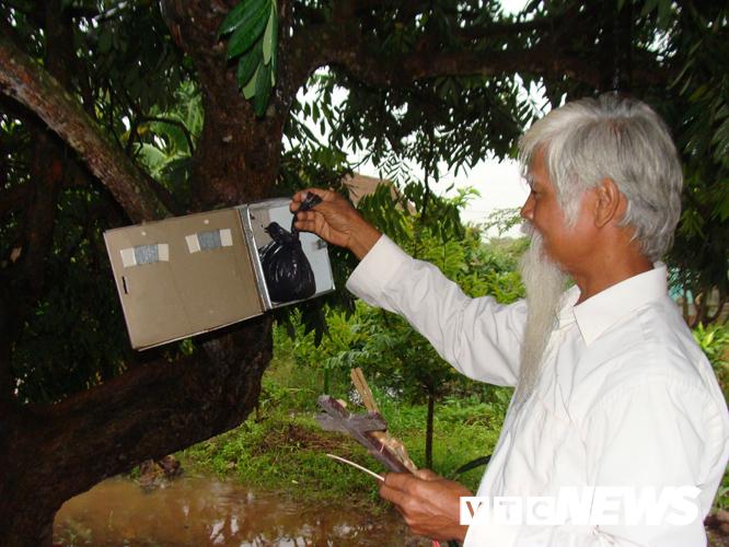 Ông Vũ Xuân Bao lấy hài nhi từ chiếc hòm tôn trên cây nhãn do một người mang đến bỏ.