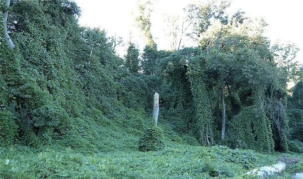 Nhung loai cay dang so khong muon mat mang phai tranh xa (1)-Hinh-8