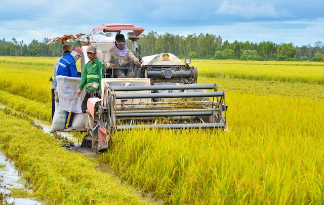 Cơ giới hóa trong các khâu canh tác lúa giúp nông dân sản xuất hiệu quả hơn.