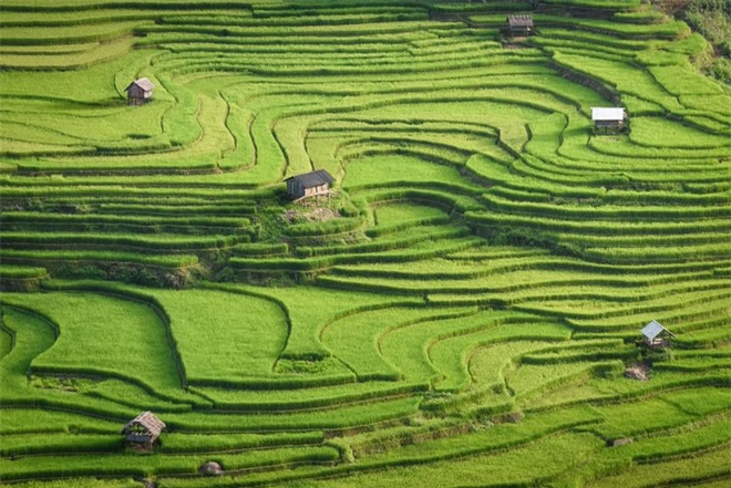 HOT: Ruộng bậc thang Mù Cang Chải vừa được công nhận Di tích Quốc gia đặc biệt, dự sẽ ngày càng hot trên bản đồ du lịch Việt - Ảnh 10.