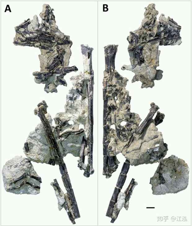 Loài khủng long có lông lâu đời nhất được tìm thấy ở Bắc Mỹ, sống cách đây 150 triệu năm - Ảnh 4.