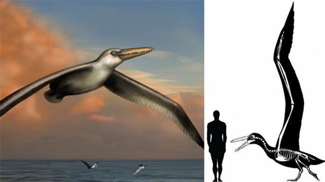 Loài người thật may mắn vì những loài chim ăn thịt khổng lồ này đã tuyệt chủng - Ảnh 1.