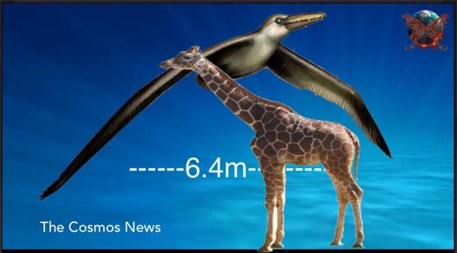 Loài người thật may mắn vì những loài chim ăn thịt khổng lồ này đã tuyệt chủng - Ảnh 2.