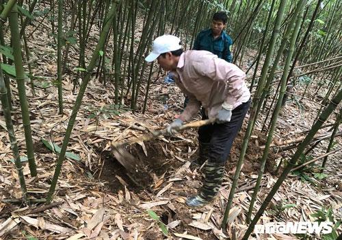 Kỳ thú chuyện săn lùng loài chuột khổng lồ trong rừng phía tây Yên Tử