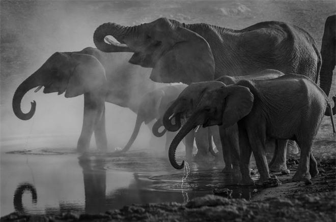 3000 USD đổi lấy 1kg báu vật sống của loài voi: Sự tàn khốc từ lòng tham con người là đây! - Ảnh 5.