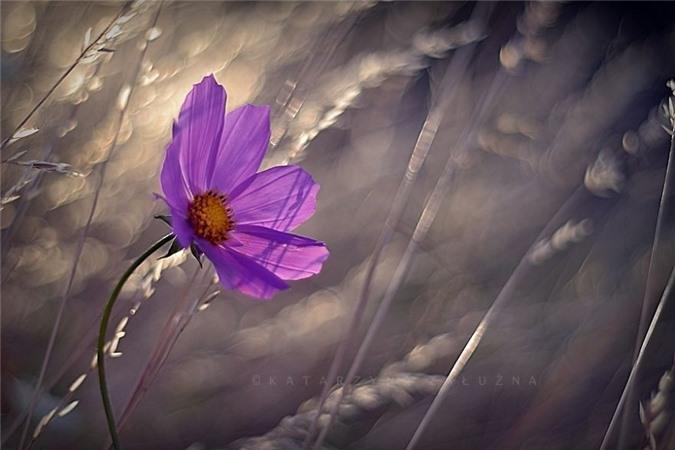Nhung bong hoa ma thuat tuyet dep o Ba Lan-Hinh-13
