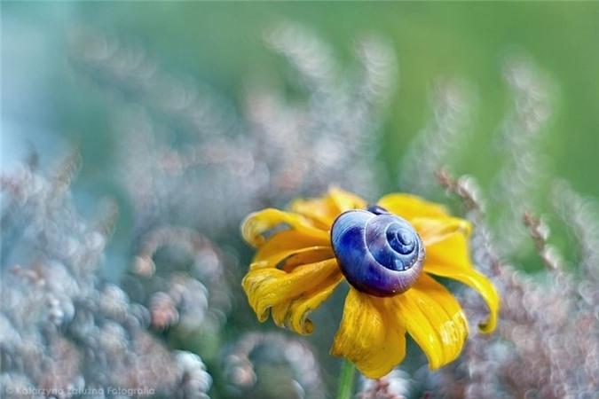 Nhung bong hoa ma thuat tuyet dep o Ba Lan-Hinh-5