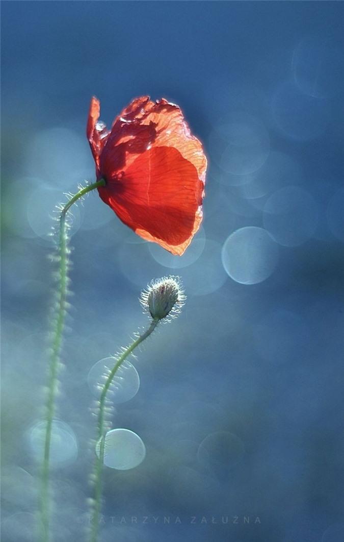 Nhung bong hoa ma thuat tuyet dep o Ba Lan-Hinh-8