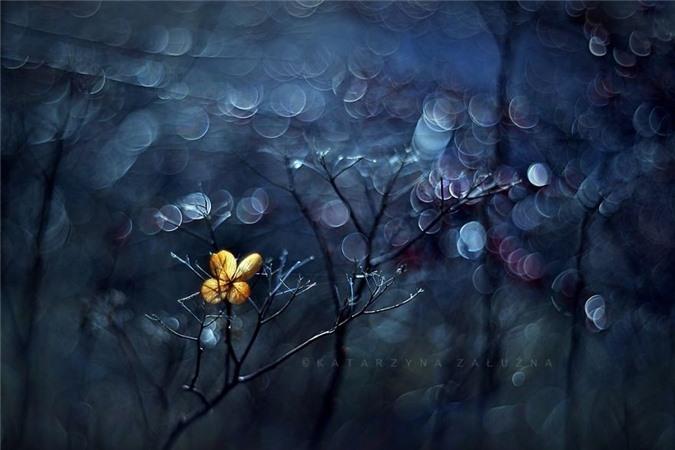 Nhung bong hoa ma thuat tuyet dep o Ba Lan-Hinh-9