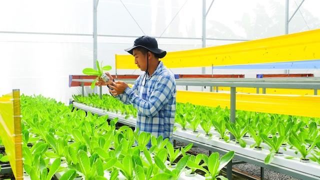 Ngành nông nghiệp TP.HCM phấn đấu tăng trưởng GRDP 6% trong năm 2020.