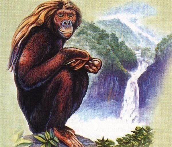 1001 thắc mắc: Đười ươi có biết sử dụng máy tỉnh bảng, biết cưa cây? - ảnh 2