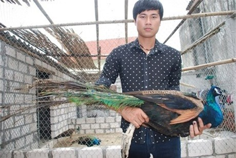 Nguyễn Đình Quỳnh