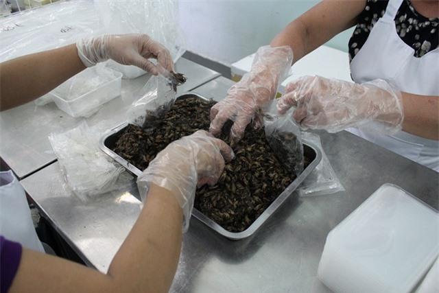 Các loại côn trùng sau khi được sơ chế sẽ được đóng túi, xuất ra thị trường. Với giá bán thành phẩm dao động khoảng 140 – 160.000 đồng/kg dế, tắc kè 60 – 100.000 đồng/kg; 150 – 250.000 đồng/kg bọ cạp… trừ chi phí chăm sóc, chăn nuôi, mỗi tháng cơ sở chị Xuân cũng thu lãi lên tới hàng trăm triệu đồng.