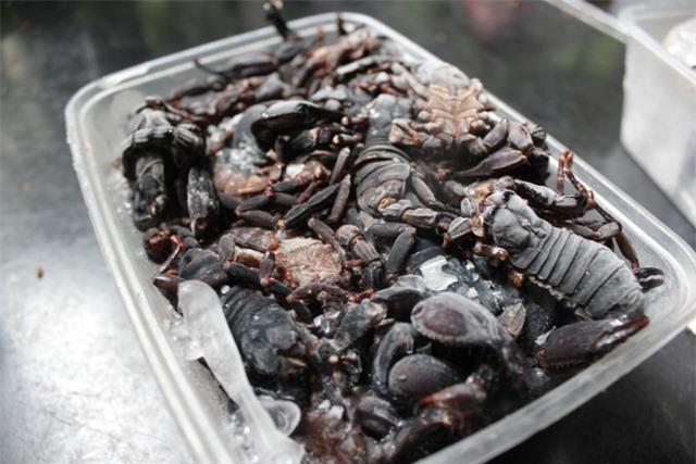 Các loại côn trùng được bảo quản đông lạnh trước khi đưa ra thị trường.