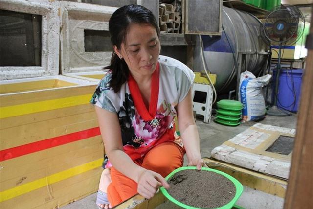 Tại trang trại côn trùng ở Tam Trinh (Hà Nội), tuy diện tích chưa đến 100m2 nhưng lại được chị Xuân nuôi gần 100 thùng dế, và khoảng 1.000 con tắc kè.