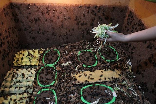 """Kiếm trăm triệu mỗi tháng nhờ """"độc chiêu"""" nuôi côn trùng trên sân thượng - 5"""