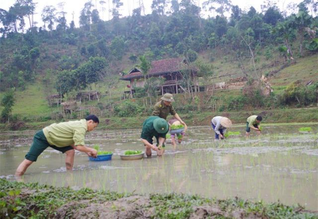 Xuống đồng cùng bà con trồng lúa nước