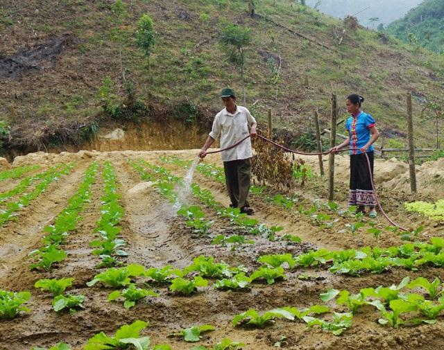 Vợ chồng ông Ngân Văn Thanh chăm sóc vườn rau hàng hóa - một trong những nội dung thuộc dự án giúp người dân vùng biên thoát nghèo mà Đồn biên phòng Thông Thụ - Bộ đội biên phòng Nghệ An đang triển khai