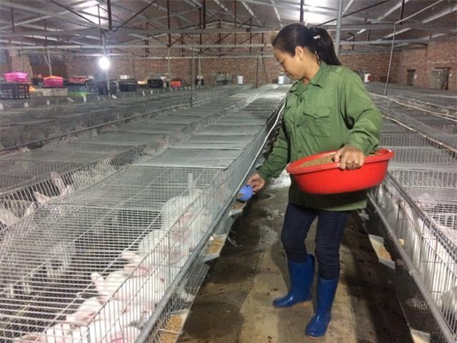 Thỏ chủ yếu ăn cám công nghiệp