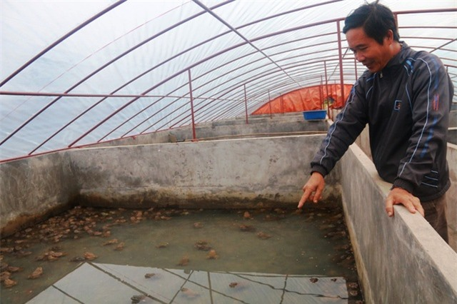 Ông Vũ Cao Thăng bên trang trại nuôi ếch cho thu tiền tỷ mỗi năm của mình.