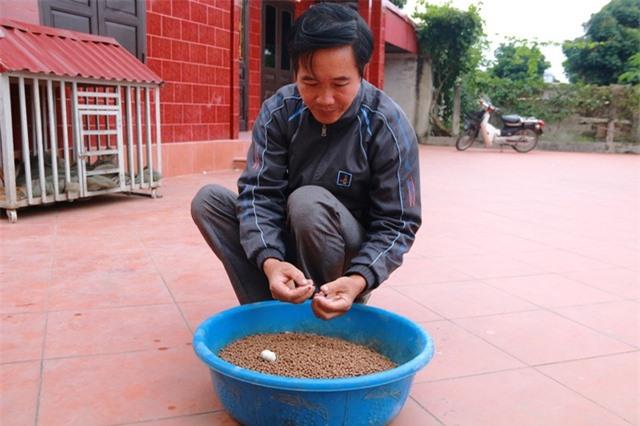 Hơn chục năm nay, ông Thăng dùng phương pháp nuôi ếch bằng các loại thảo mộc như tỏi, ớt, cỏ mực... cho thu nhập kinh tế cao.