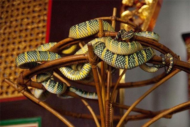 Ngôi đền linh thiêng toàn rắn độc bò lổm ngổm tứ phía - 2