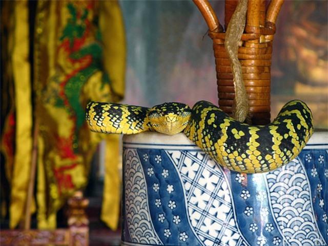 Ngôi đền linh thiêng toàn rắn độc bò lổm ngổm tứ phía - 3