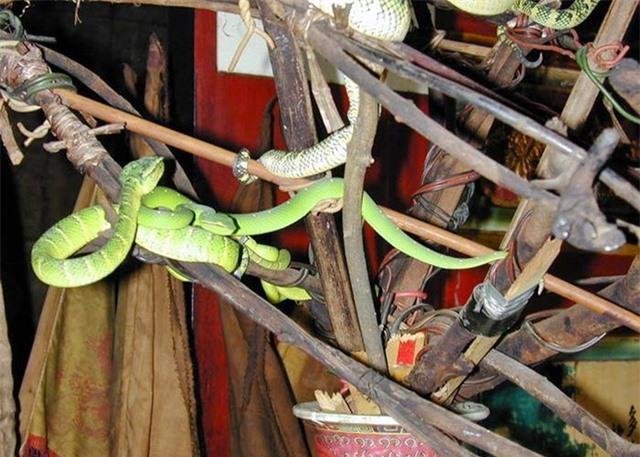 Ngôi đền linh thiêng toàn rắn độc bò lổm ngổm tứ phía - 4