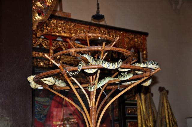 Ngôi đền linh thiêng toàn rắn độc bò lổm ngổm tứ phía - 5