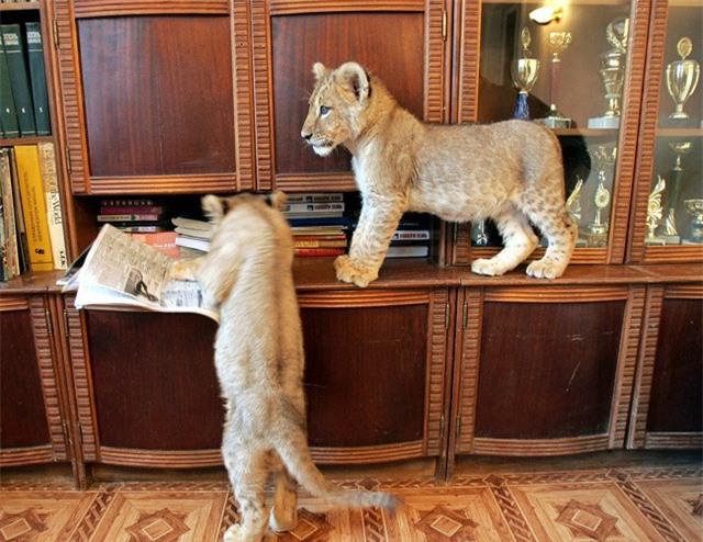 Những thú cưng đặc biệt và kỳ lạ đến khó tin - 4