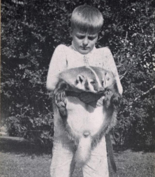 Trong hình chính là Josiah - thú cưng của Archie, con trai cố tổng thống Mỹ Theodore Roosevelt. Điều đặc biệt ở chỗ đây chính là một… con lửng (một loài động vật ăn tạp thuộc họ chồn).